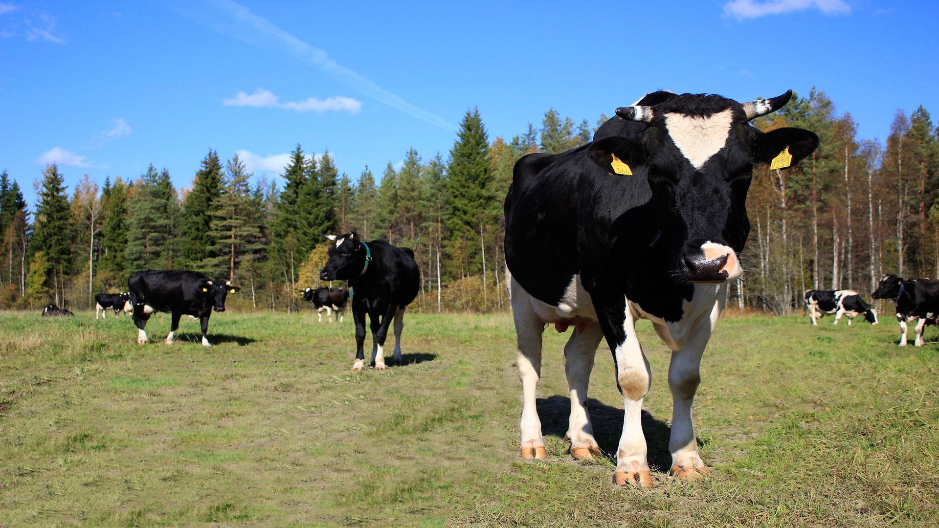 Los-ganaderos-y-los-agricultores-podrán-pedir-avales-para-préstamos-1920
