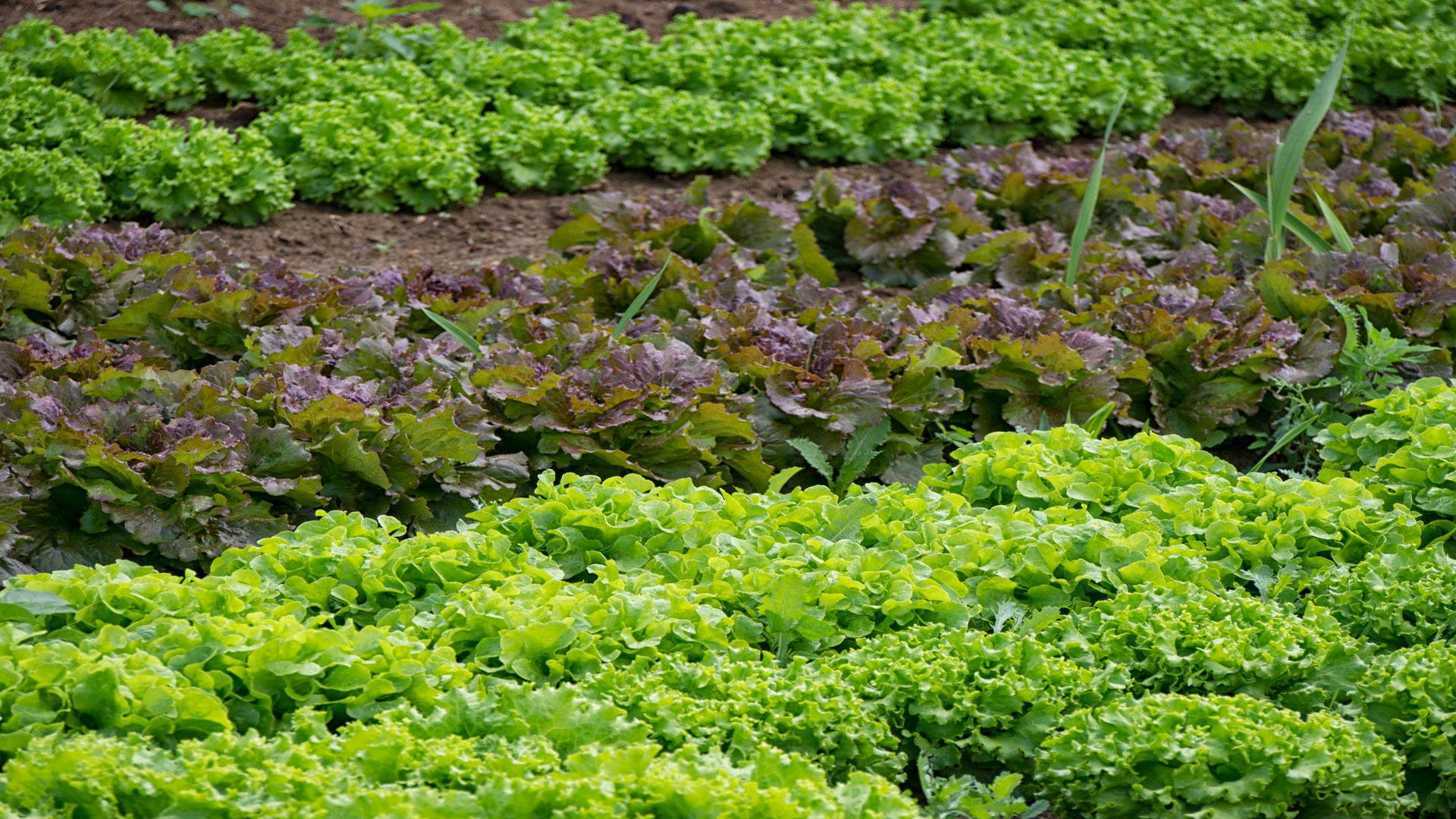 que se siembra en septiembre facilisimocom mejores 37 im 225 genes de minigu 237 as de siembra que se siembra en septiembre facilisimocom la siembra en septiembre