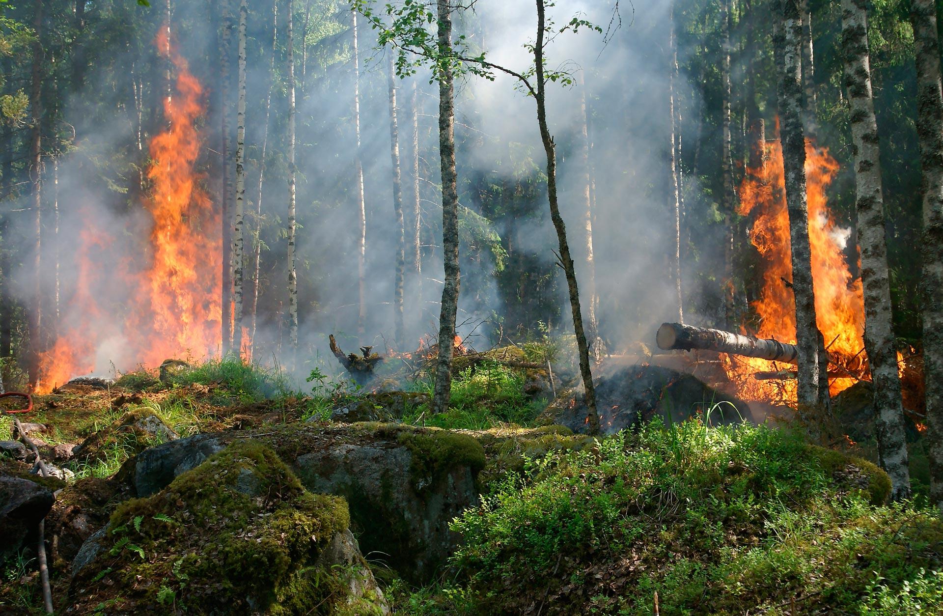 Los-incendios-forestales