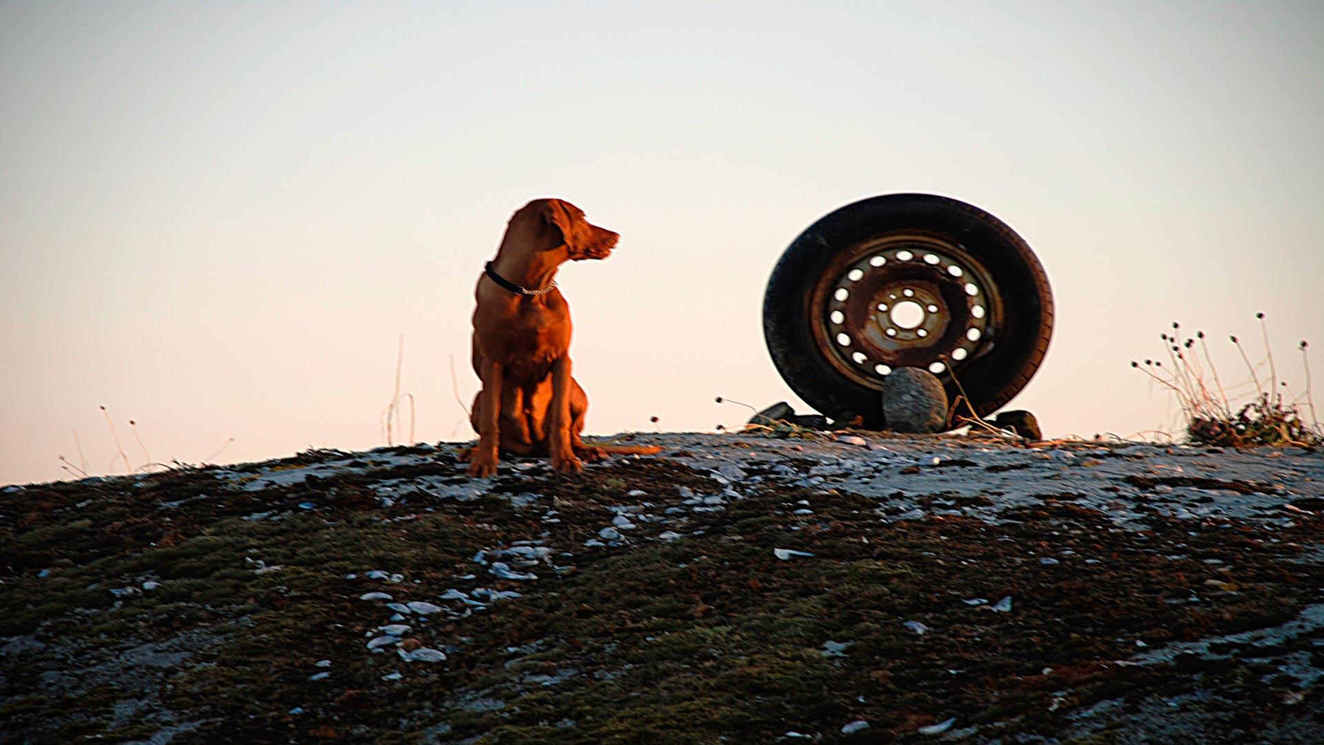 La irresistible atracción que sienten los perros por las ruedas-1920