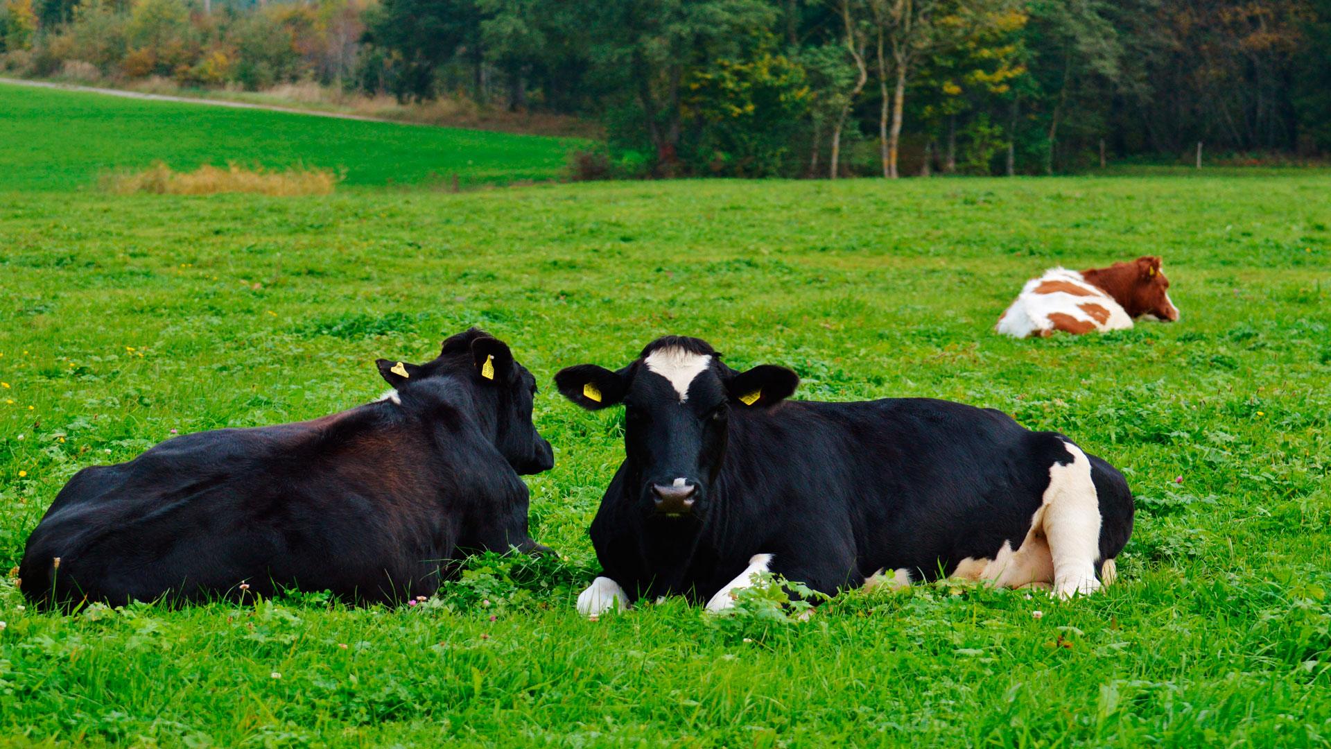 PROHÍBIDO-El-uso-de-antibióticos-en-los-animales-de-granja-1920