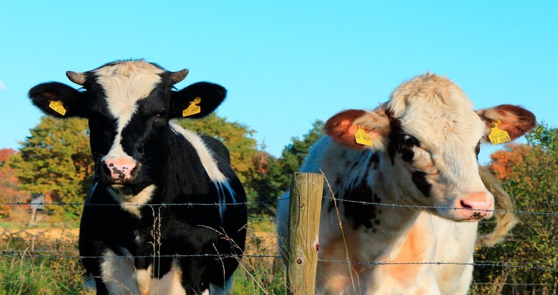 en-francia-las-ganaderias-de-leche-reducen-la-produccion-de-leche-1920