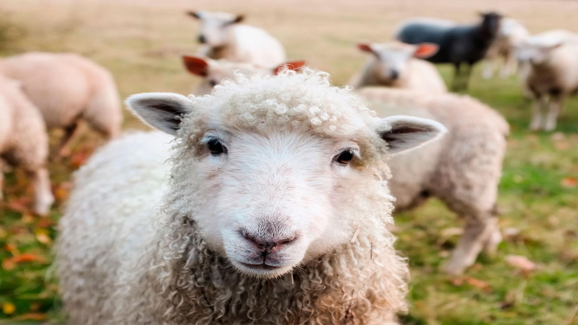 Publicada-la-orden-por-la-que-se-regulan-las-compensaciones-por-el-sacrificio-de-animales-1920