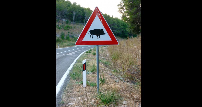 Un-silbato-que-ahuyenta-los-animales-salvajes-de-las-carreteras-1920