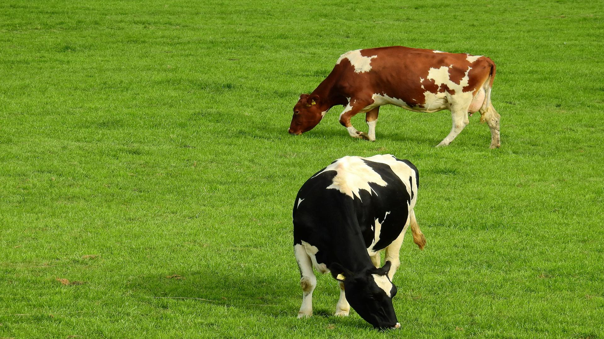 El Ministerio da luz ver a que los ganaderos gallegos puedan vender directamente carne y leche al consumidor1920