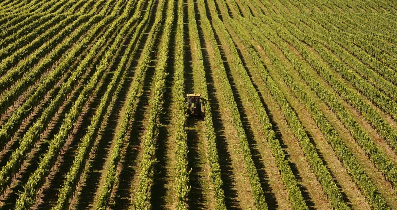 Nuevas ayudas a las inversiones agrícolas para la creación de empresas.1920