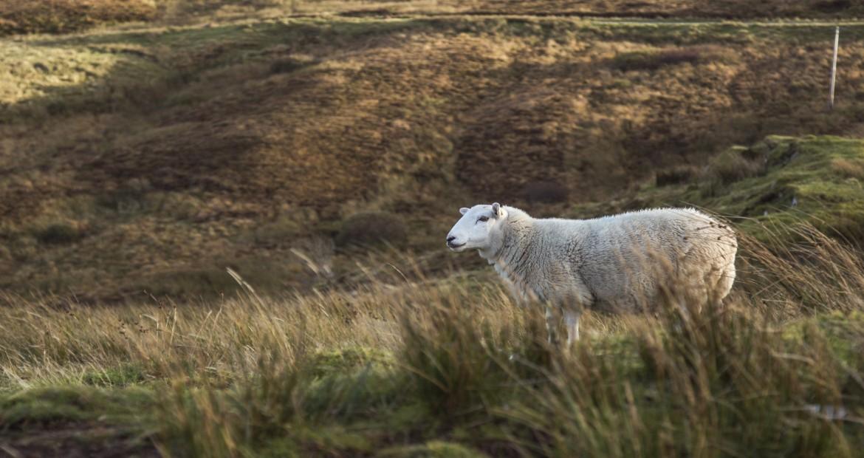 La Consellería de Medio Rural proyecta un plan piloto para recuperar tierras agrarias abandonadas1920